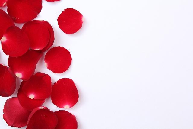 薔薇、赤、リセット