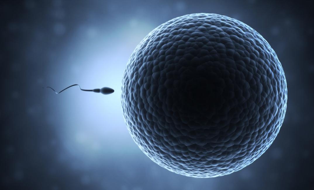 精子、精液、卵子、受精、授精