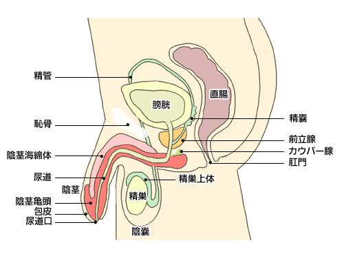 (出典:医療総合サイトQLife)