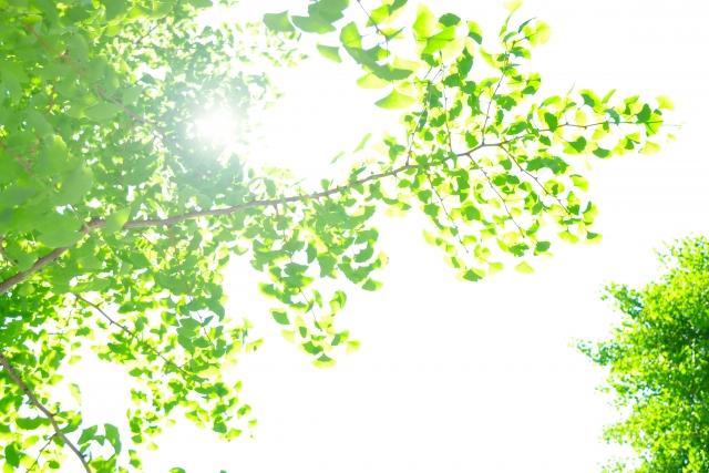 木漏れ日、木、太陽