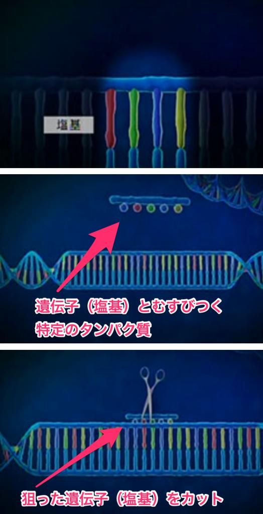 ゲノム編集、遺伝子組換え、DNA