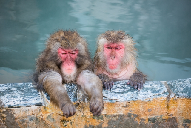 お風呂、湯、猿