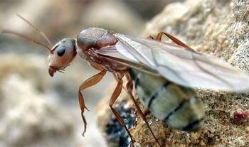 女王蟻、アリ、巣